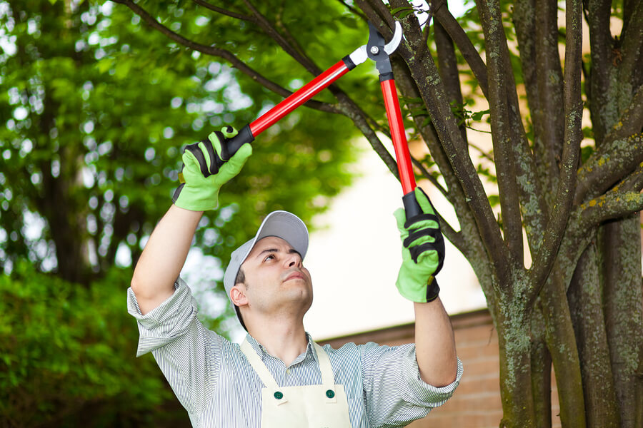 This is a picture of a tree pruning service.